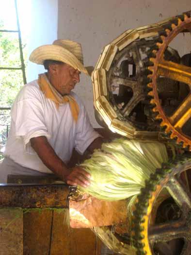 yucatan22
